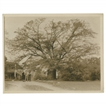 Early 1930s Augusta National Golf Club Type 1 Original Photo of Oak Tree by Clubhouse at 9th Hole