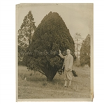 Early 1930s Augusta National Golf Club Type 1 Original Photo of a Surveyor w/ Tree on 18th Hole