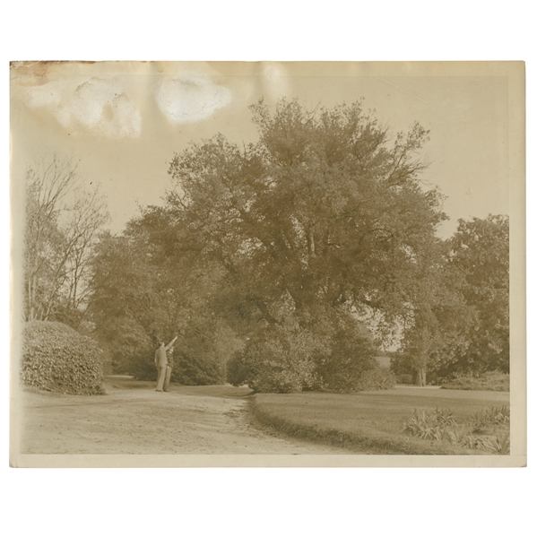 Early 1930's Augusta National Golf Club Type 1 Original Photo of Magnolia Lane From Clubhouse