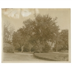 Early 1930s Augusta National Golf Club Type 1 Original Photo of Magnolia Lane From Clubhouse