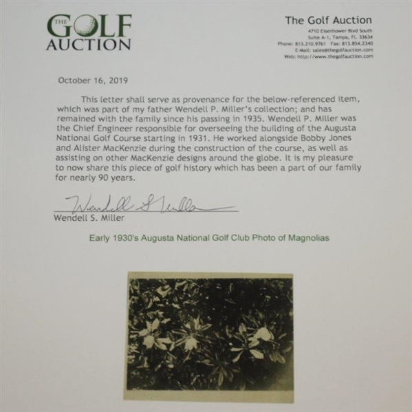 Early 1930's Augusta National Golf Club Original Photo of Magnolias